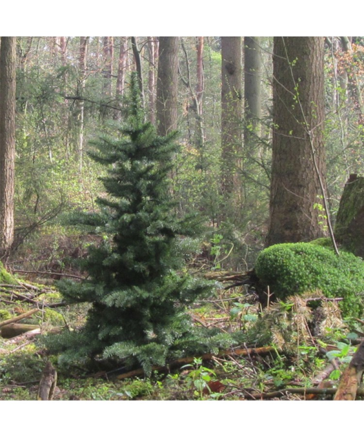 Basic Tree Warm Bordeaux 150cm-78