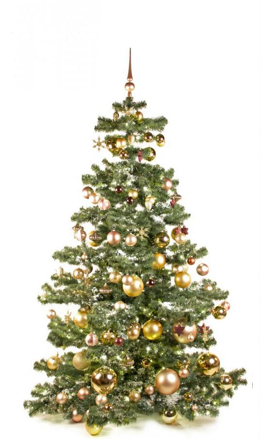 Basic Tree Golden Mocca 210cm-1441