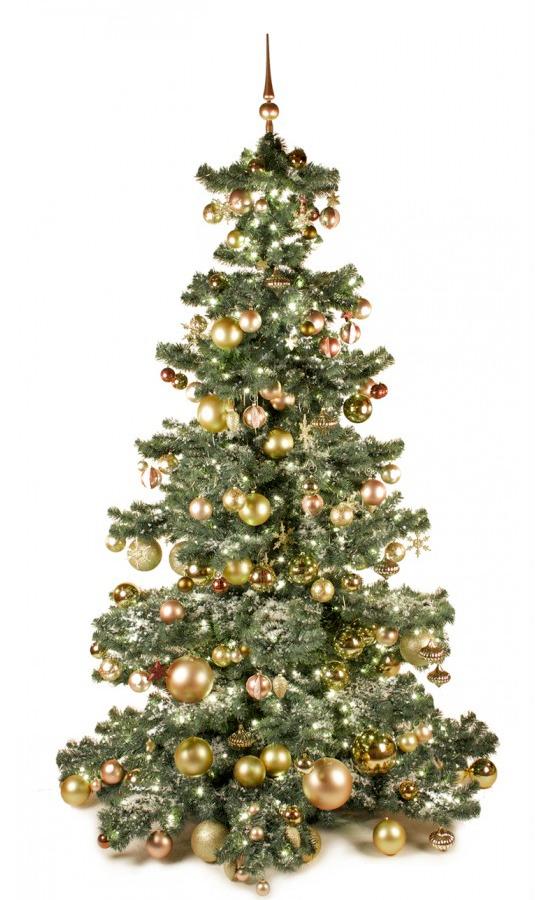 Basic Tree Golden Mocca 240cm-1440
