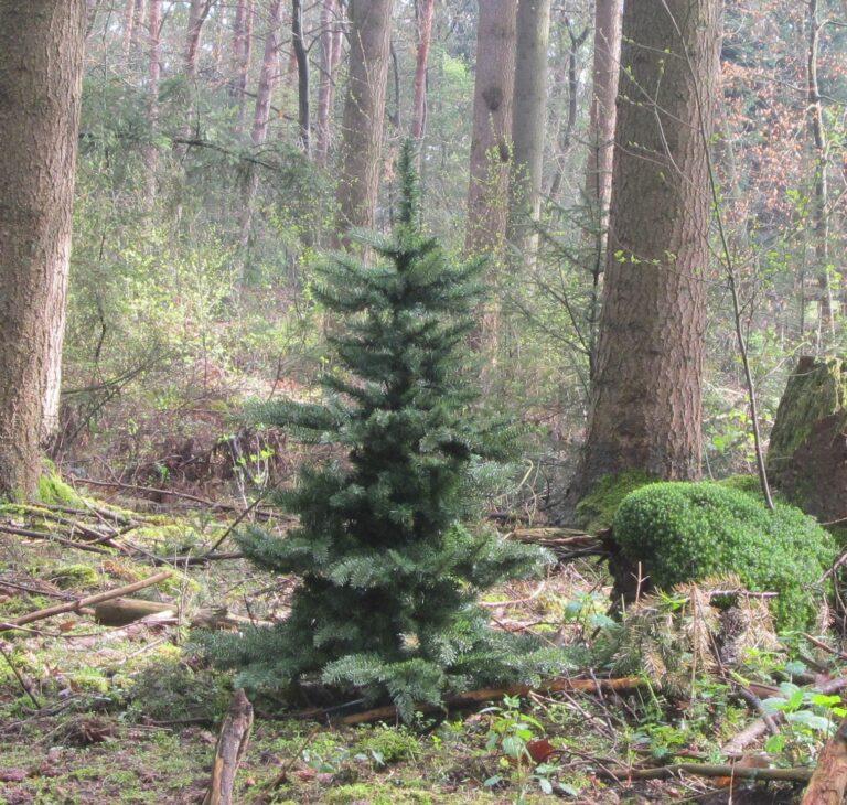 Basic Tree Purple Milka 240cm-1762